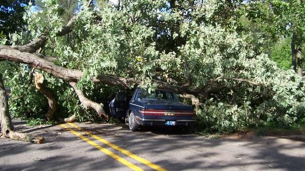 tree fall.jpg